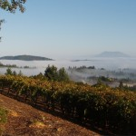 Mount St. Helena and morning fog on valley floor as seen from Paloma Vineyard