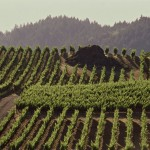 Big Rock Vineyard Block at Pride Mountain Vineyard
