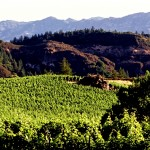 Big Rock Vineyard Block on Pride Mountain Vineyard