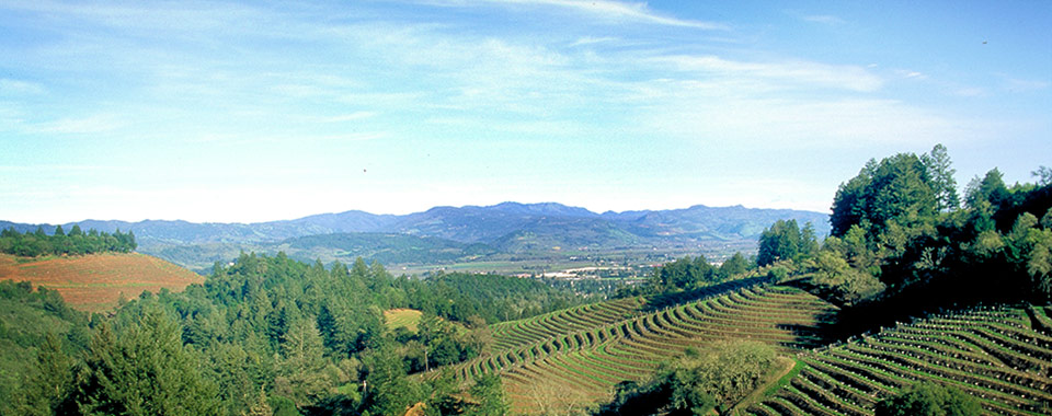 Spring Mountaint District Appellation