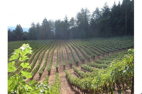 Upper Vineyard Harvest 08