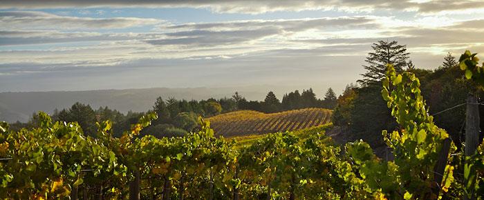 vineyard784