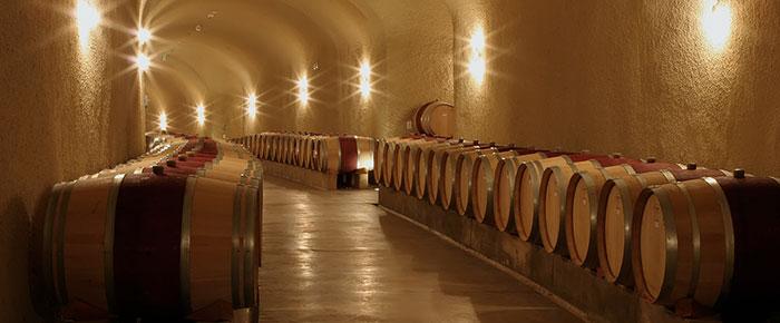 vineyard785